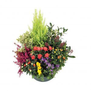 Coupes de plantes